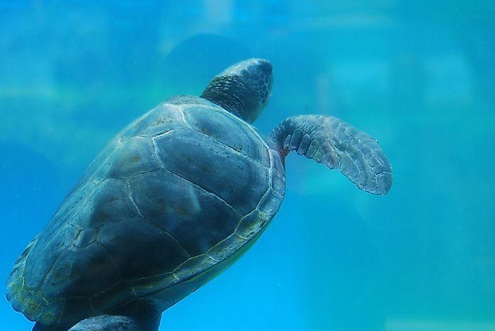 What Animals Live In The Atlantic Ocean Worldatlas Com