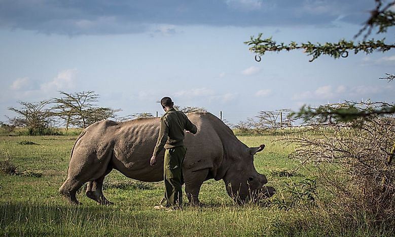#1 The Urgent Need To Conserve The Rhinos -
