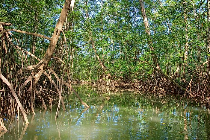 What Are the Special Features of Plants Growing in Mangrove Habitats?