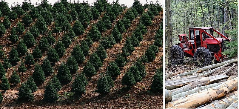Forest Resource Management : Sustained yield use in forestry and natural resource