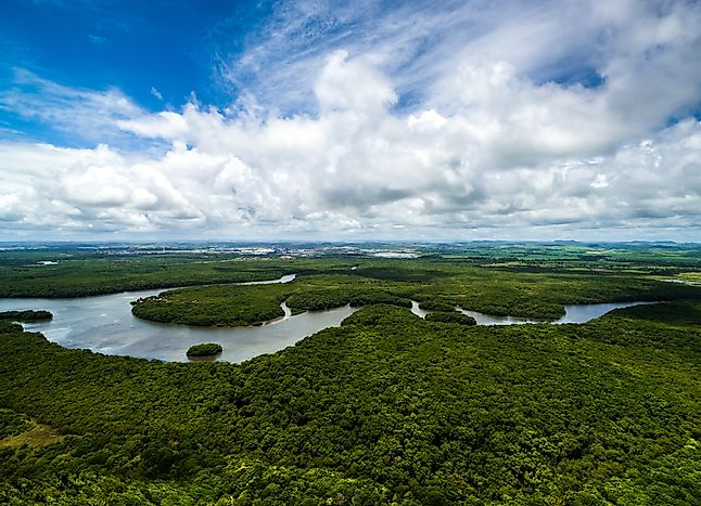 The Amazon rainforest in Brazil.