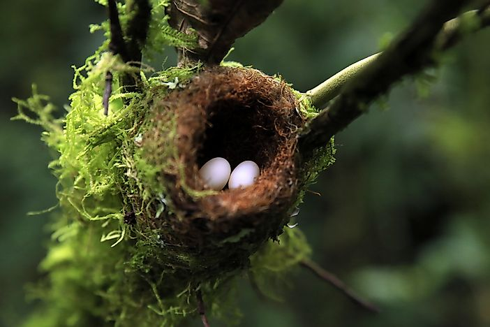 Which Bird Lays the Smallest Egg?