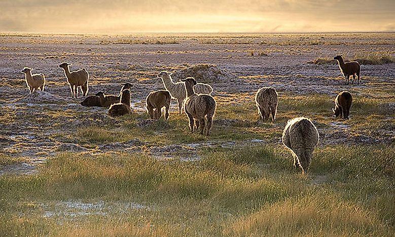 The Major Deserts Of South America - WorldAtlas.com