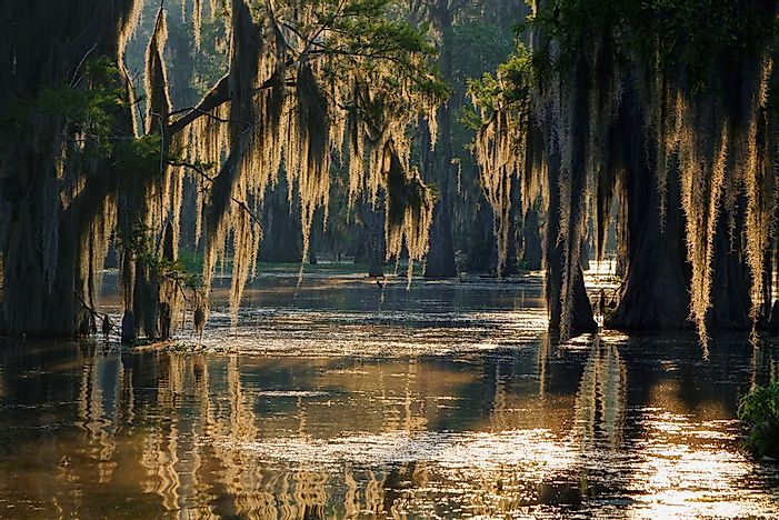 What Is A Bayou?