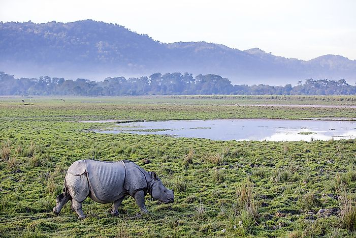 #8 Kaziranga National Park, India