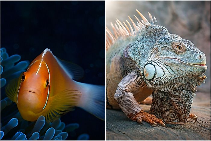 Are Fish Reptiles?