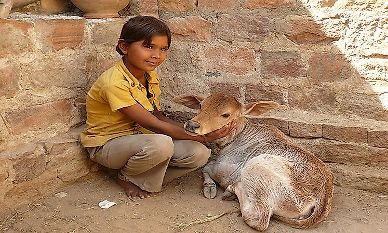 Preaching Love For All Living Beings: The Bishnois Of India