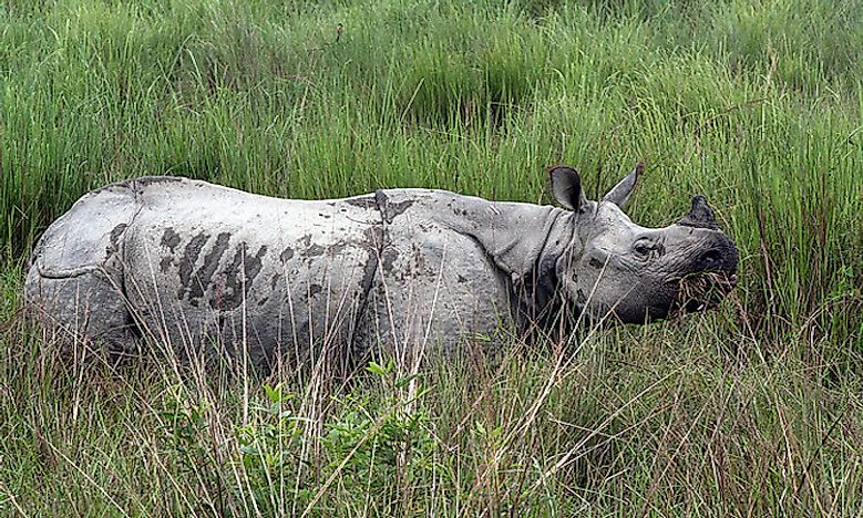 #4 Greater One-Horned Rhinoceros -