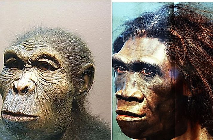 Ancient And Modern Human Species