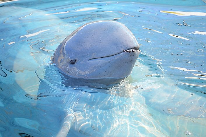 #7 Laos Is One Of The Last Refuges Of The Nearly Extinct Irrawaddy Dolphins