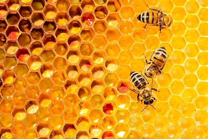 Why Do Bees Make Honey?