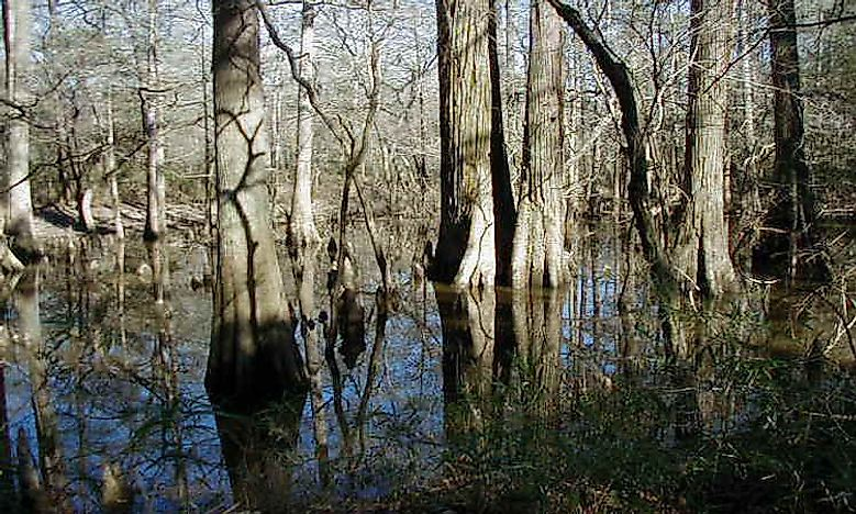 #2 Big Thicket National Preserve -