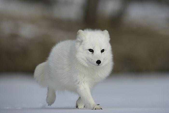 What Animals Live In Europe? - WorldAtlas com