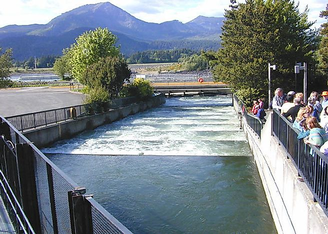 What Is The Importance Of A Fish Ladder?