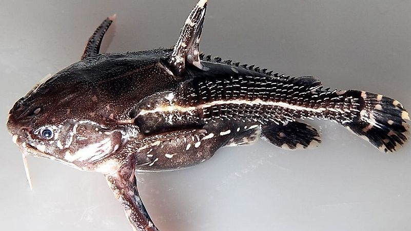 Native Fish Of Colombia Worldatlas Com