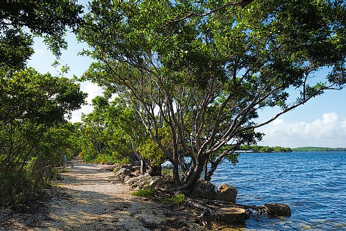 #5 Florida National Scenic Trail