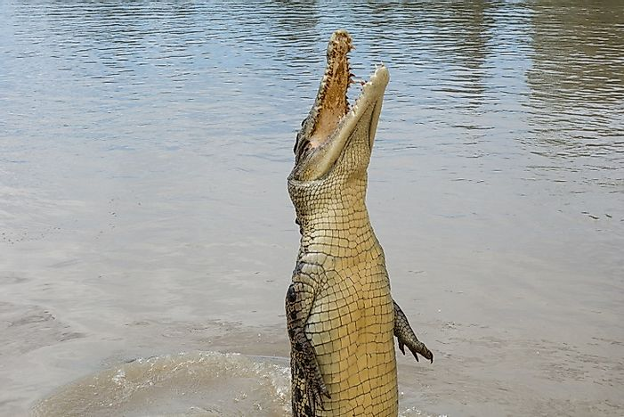 #5 Saltwater Crocodile