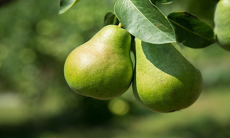 The World's Top Pear Producing Countries