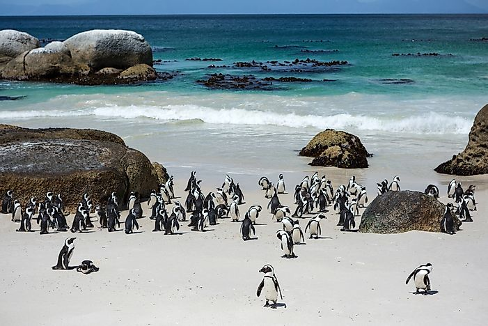 Penguins in Cape Town, South Africa.