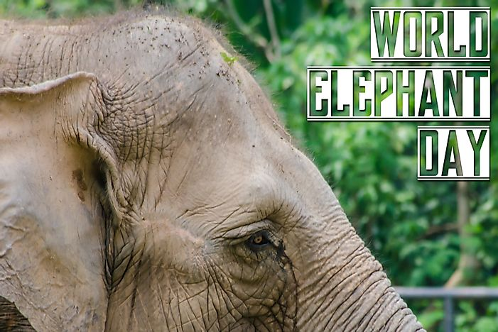 What and When is World Elephant Day?