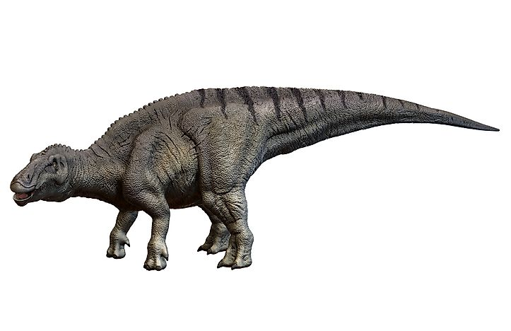Shantungosaurus weighed approximately 23 tonnes.