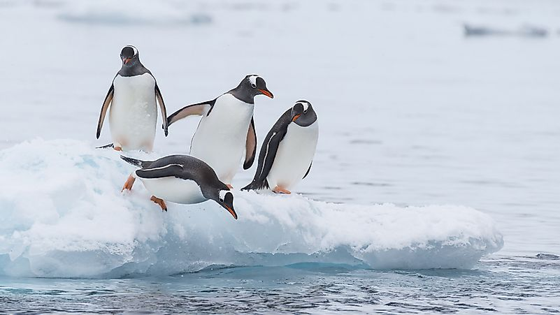 The Best Places In The World To See Penguins In The Wild