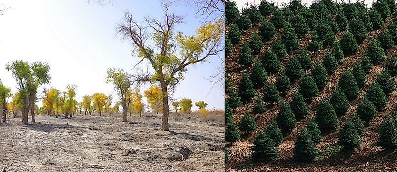 Afforestation And Reforestation