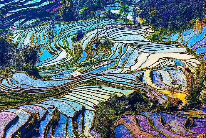The Awe-Inspiring Beauty of Rice Terraces