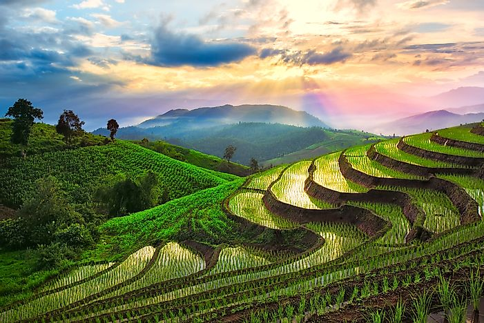 A terraced rice terrace in Chiangmai.