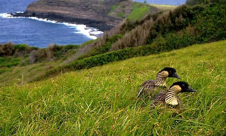 What Animals Live In Hawaii?