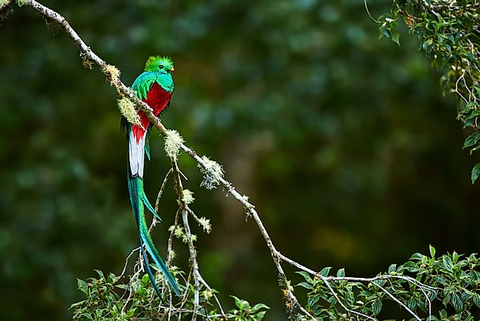 What is the National Bird of Guatemala?