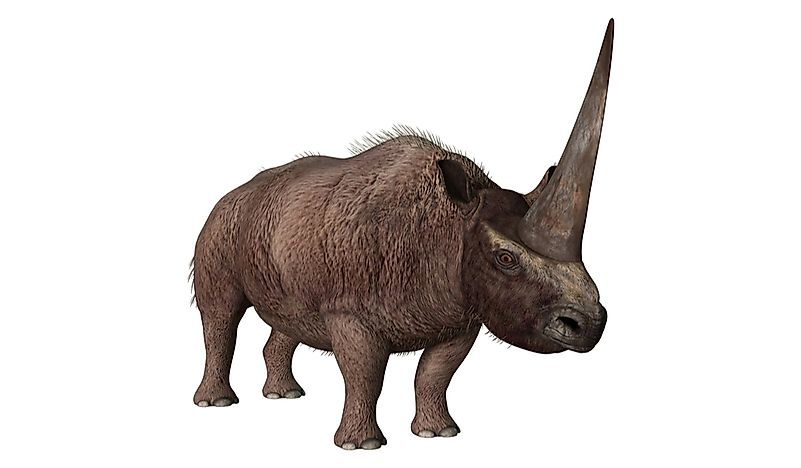 What Was The Siberian Unicorn?