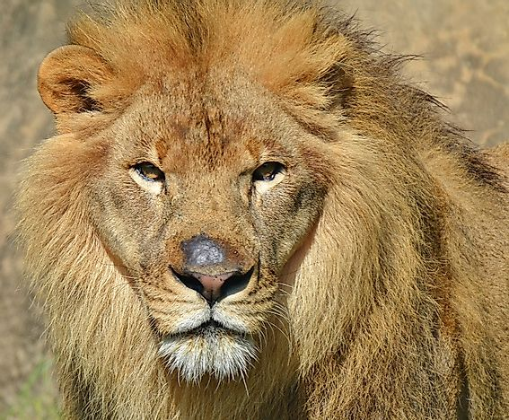 Species In Danger From Hunting In Modern Africa