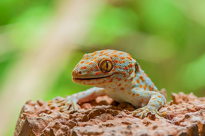 a research on the strong adhesive properties of gecko Download scientific diagram| to determine the adhesive properties of gecko   bio-inspired hierarchical designs for stiff, strong interfaces between materials of.