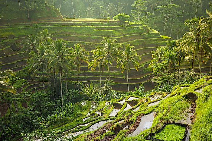 The beautiful Tegalalang rice terraces in Bali, Indonesia.