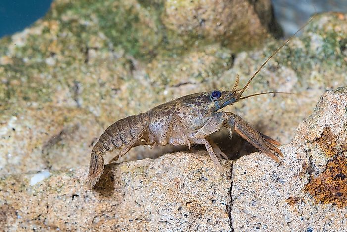 Are Insects and Crustaceans Related? - WorldAtlas com