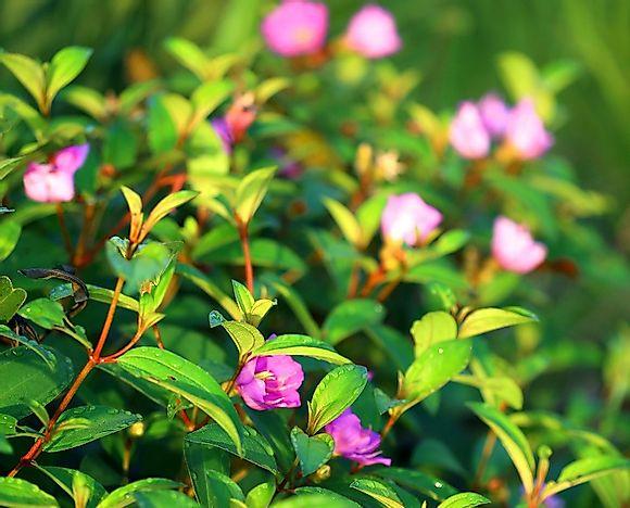 native plant species of brazil