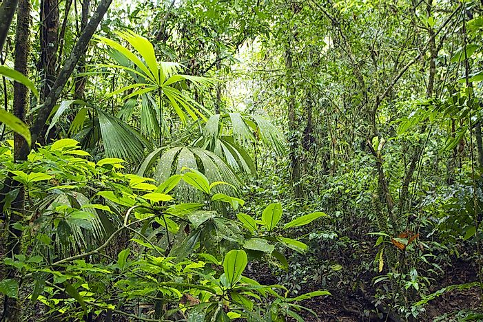 The Amazon forest in Ecuador.