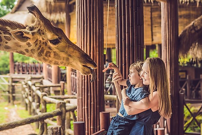 The Top Zoos in the World