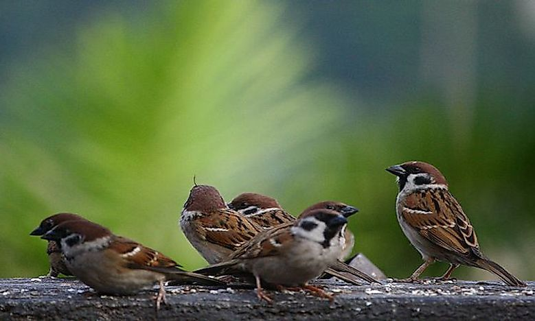 When And Why Is World Sparrow Day Celebrated?
