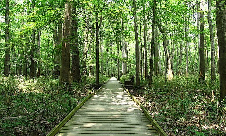 #3 Congaree - South Carolina