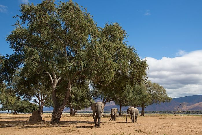 #7 Mana Pools National Park