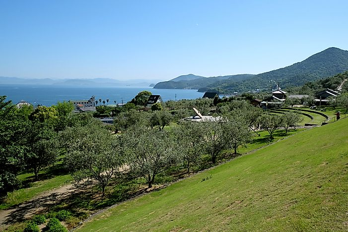 An olive park at Shodoshima Island, Japan.