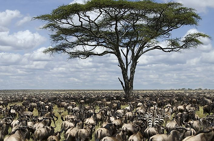 #4 Serengeti Migration