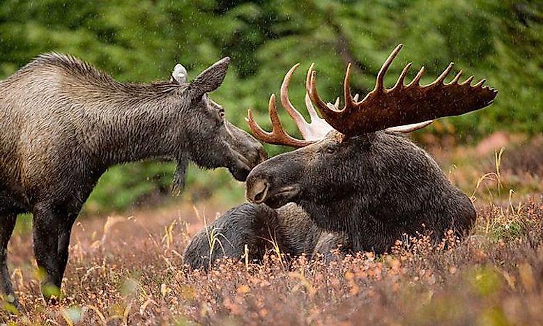 What Animals Live In Alaska? - WorldAtlas.com