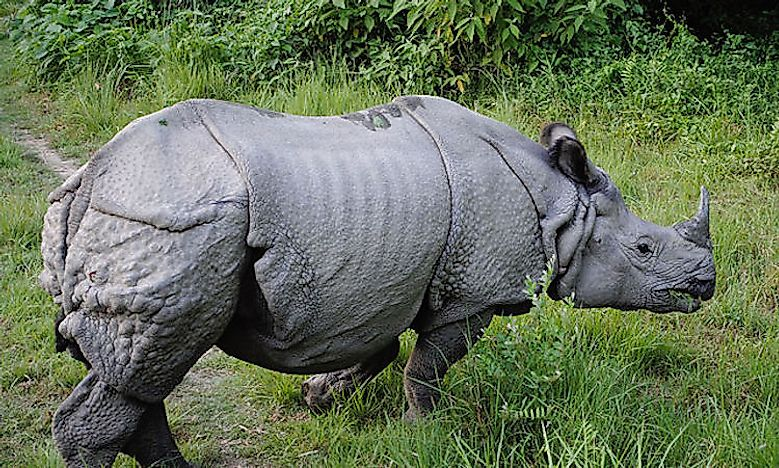 #3 Indian Rhinoceros -