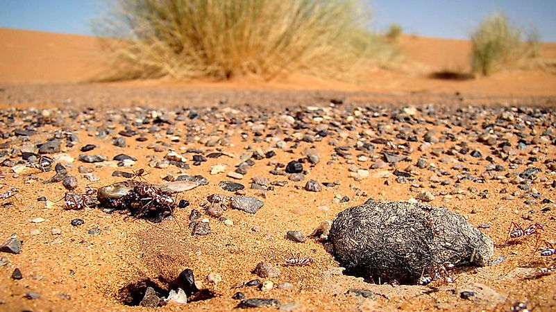 what animals live in the sahara desert worldatlascom