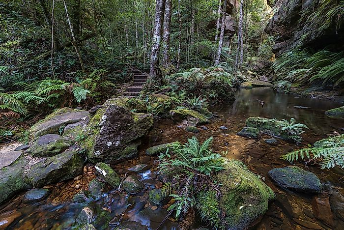 The forest of Blue Mountains National Park, Australia.