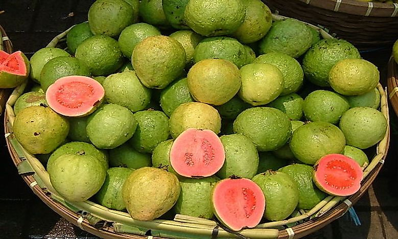 Top Guava Producing Countries In The World