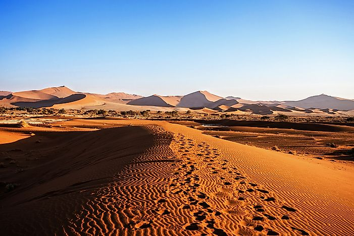 Which Animals Live in the Namib Desert?